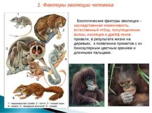Биологические факторы эволюции – наследственная изменчивость, естественный от