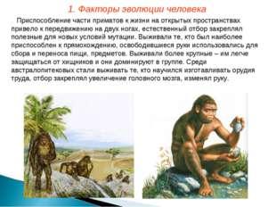 Приспособление части приматов к жизни на открытых пространствах привело к пер