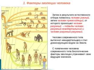 Затем в результате естественного отбора появились человек умелый, затем челов