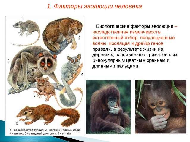 Биологические факторы эволюции – наследственная изменчивость, естественный от...