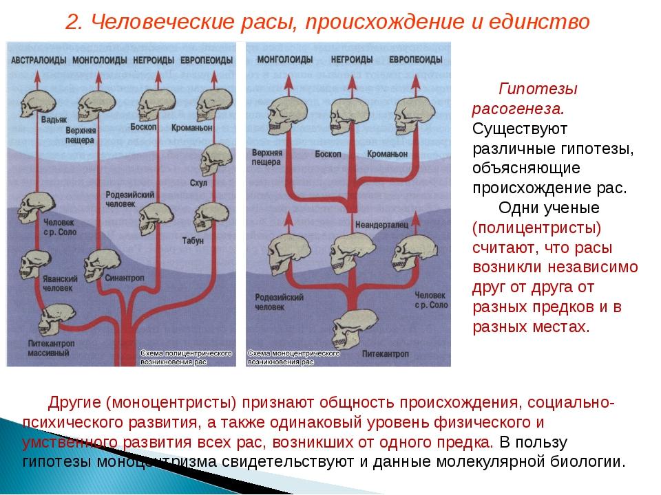 Гипотезы расогенеза. Существуют различные гипотезы, объясняющие происхождение...