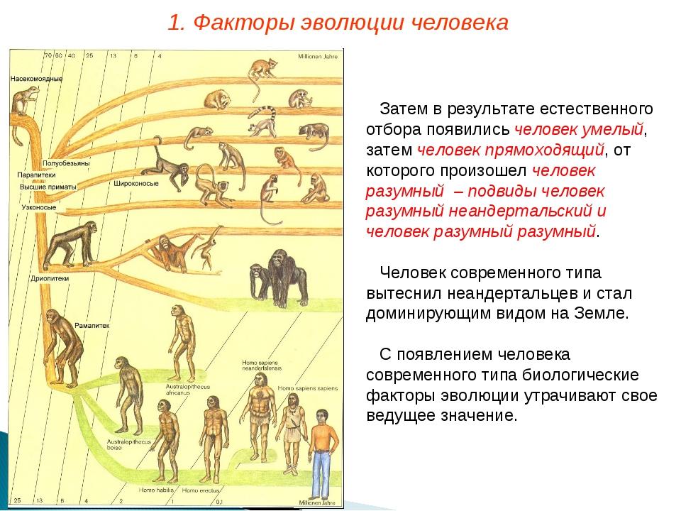 Затем в результате естественного отбора появились человек умелый, затем челов...