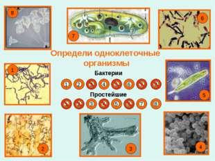 Определи одноклеточные организмы Бактерии Простейшие 1 2 3 4 5 6 7 8 1 5 6 7