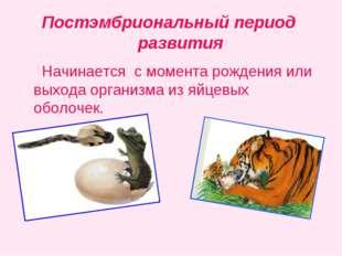 Постэмбриональный период развития Начинается с момента рождения или выхода ор