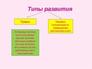 Типы развития Непрямое (сопровождается превращением (метаморфозом)) Прямое И