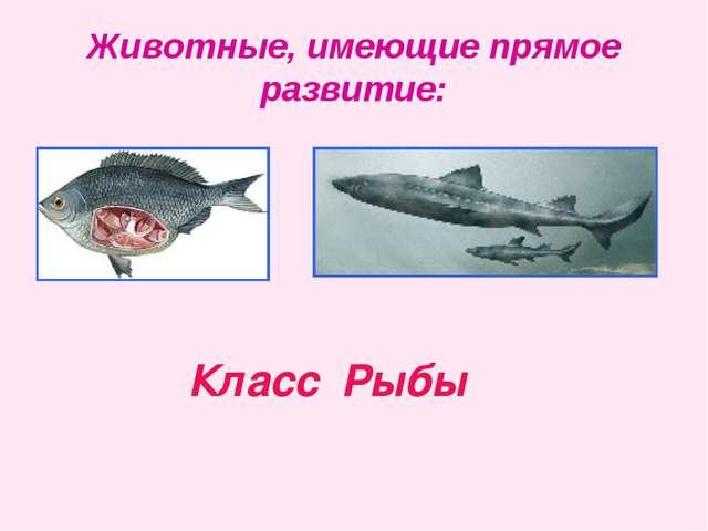 Животные, имеющие прямое развитие: Класс Рыбы