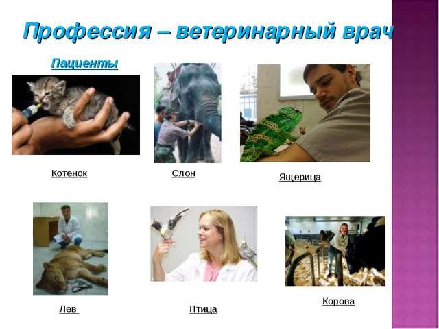 Котенок Слон Ящерица Лев Птица Корова Пациенты Профессия – ветеринарный врач