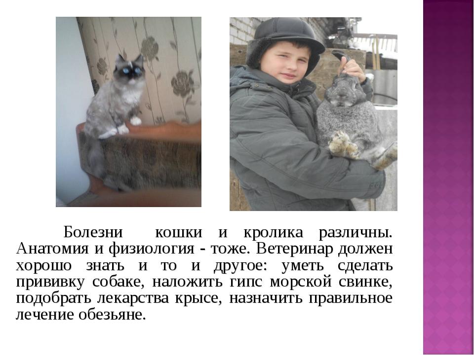 Болезни кошки и кролика различны. Анатомия и физиология - тоже. Ветеринар до...