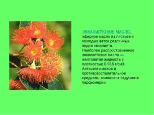 ЭВКАЛИПТОВОЕ МАСЛО, эфирное масло из листьев и молодых веток различных видов