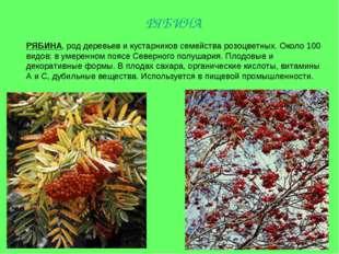 РЯБИНА, род деревьев и кустарников семейства розоцветных. Около 100 видов; в