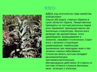 АЛОЭ, род многолетних трав семейства асфоделовых. Свыше 350 видов, главным об