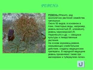 РЕВЕНЬ (Rheum), род многолетних растений семейства гречишных. Около 50 видов,