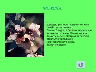 БЕЛЕНА, род одно- и двулетних трав семейства пасленовых. Около 20 видов, в Ев