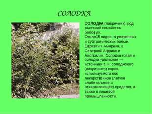 СОЛОДКА (лакричник), род растений семейства бобовых. Около15 видов, в умеренн