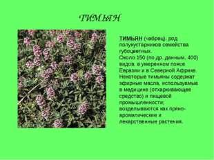 ТИМЬЯН (чабрец), род полукустарников семейства губоцветных. Около 150 (по др.