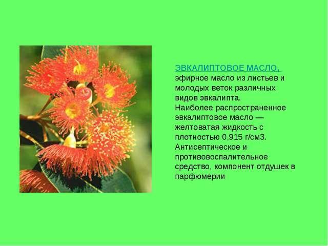 ЭВКАЛИПТОВОЕ МАСЛО, эфирное масло из листьев и молодых веток различных видов...