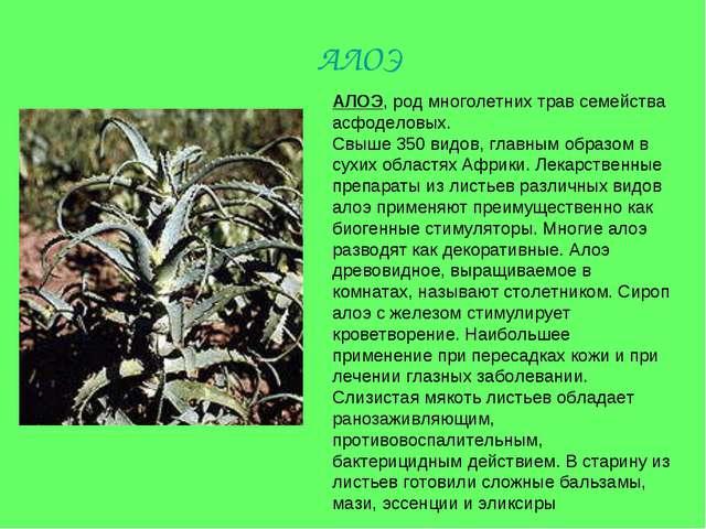 АЛОЭ, род многолетних трав семейства асфоделовых. Свыше 350 видов, главным об...