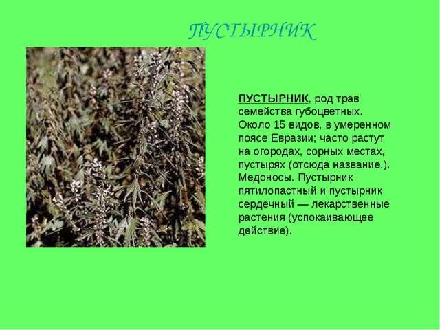 ПУСТЫРНИК, род трав семейства губоцветных. Около 15 видов, в умеренном поясе...