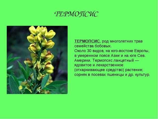 ТЕРМОПСИС, род многолетних трав семейства бобовых. Около 30 видов, на юго-вос...