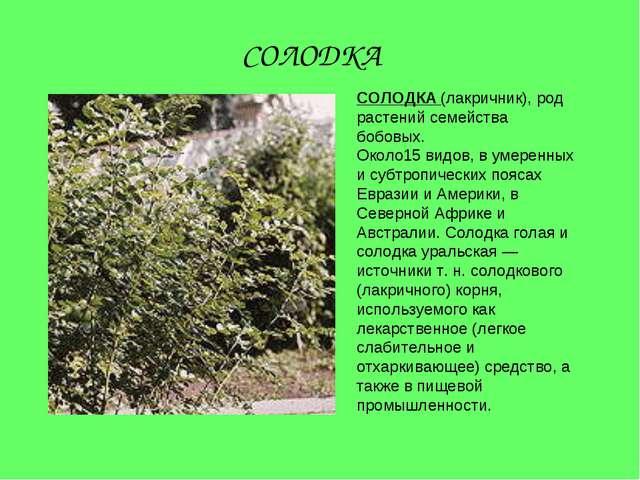СОЛОДКА (лакричник), род растений семейства бобовых. Около15 видов, в умеренн...