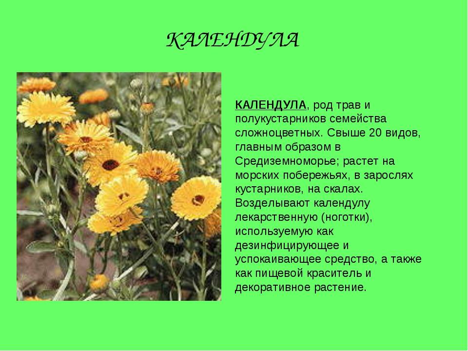 КАЛЕНДУЛА, род трав и полукустарников семейства сложноцветных. Свыше 20 видов...