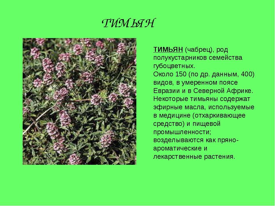 ТИМЬЯН (чабрец), род полукустарников семейства губоцветных. Около 150 (по др....