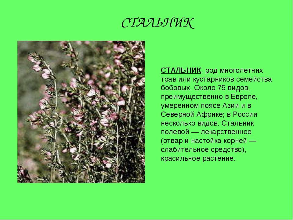 СТАЛЬНИК, род многолетних трав или кустарников семейства бобовых. Около 75 ви...