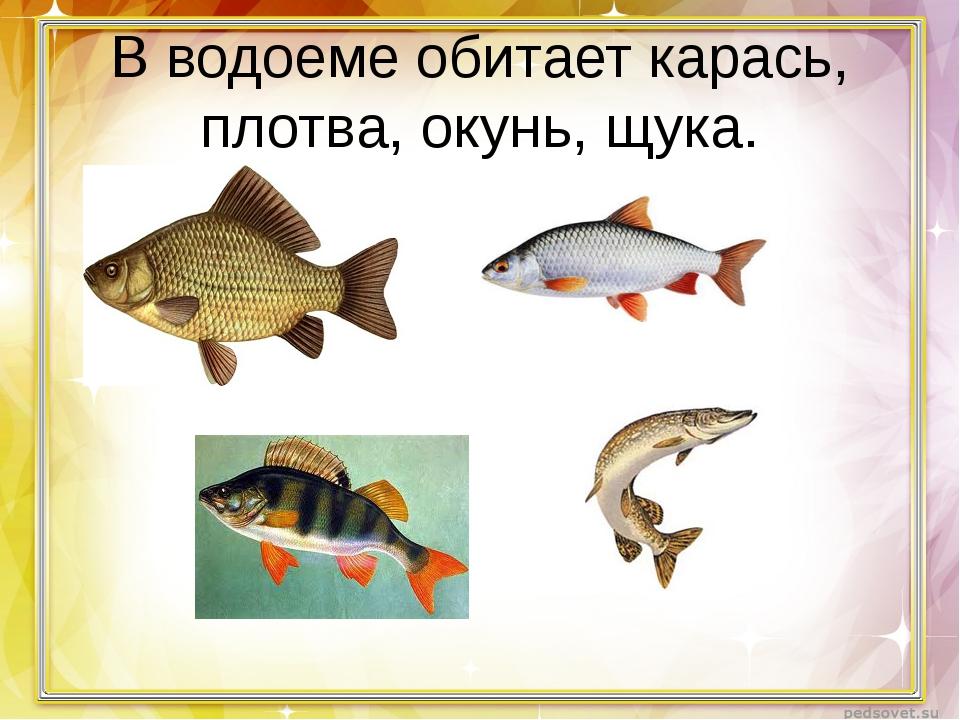 В водоеме обитает карась, плотва, окунь, щука.