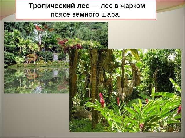 Тропический лес — лес в жарком поясе земного шара.