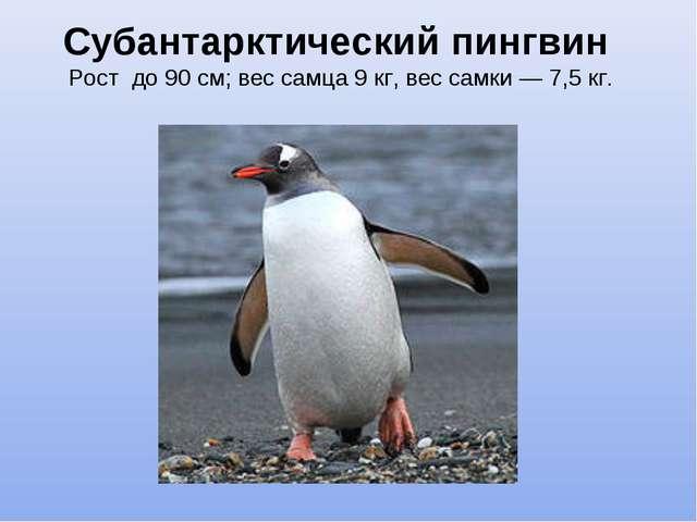 Субантарктический пингвин Рост до 90 см; вес самца 9 кг, вес самки — 7,5 кг.