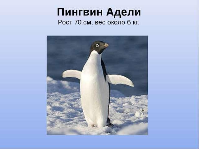 Пингвин Адели Рост 70см, вес около 6кг.