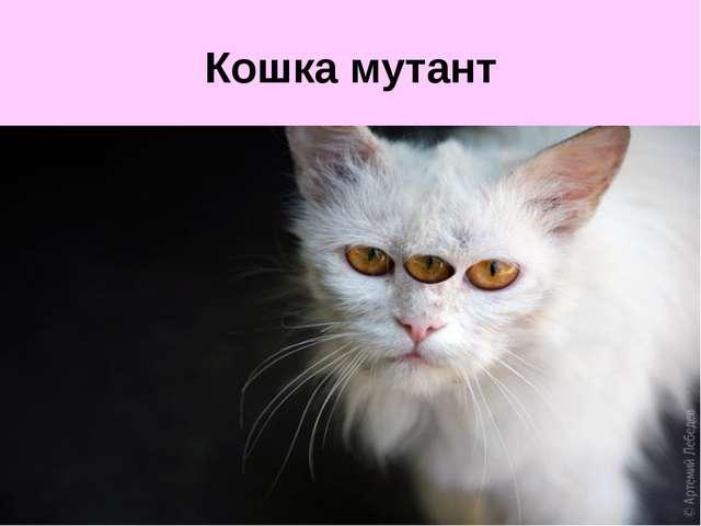 Кошка мутант