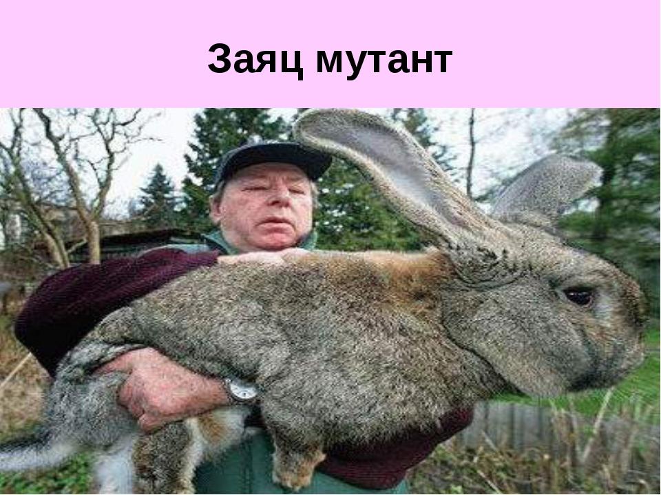 Заяц мутант
