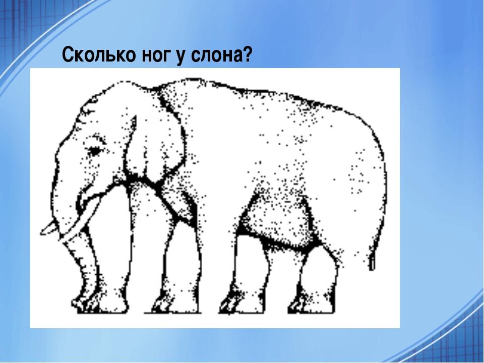 Сколько ног у слона?