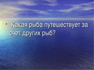 Какая рыба путешествует за счет других рыб?