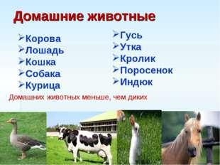 Домашние животные Корова Лошадь Кошка Собака Курица Гусь Утка Кролик Поросено