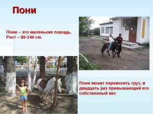 Пони Пони – это маленькая лошадь. Рост – 80-140 см. Пони может перевозить гру