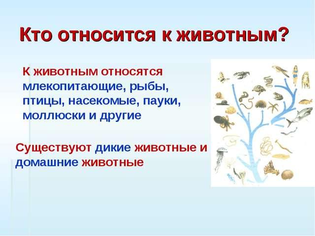 Кто относится к животным? К животным относятся млекопитающие, рыбы, птицы, на...
