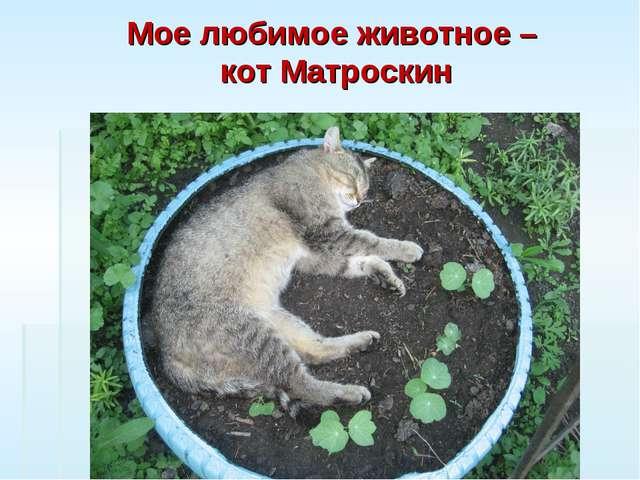 Мое любимое животное – кот Матроскин