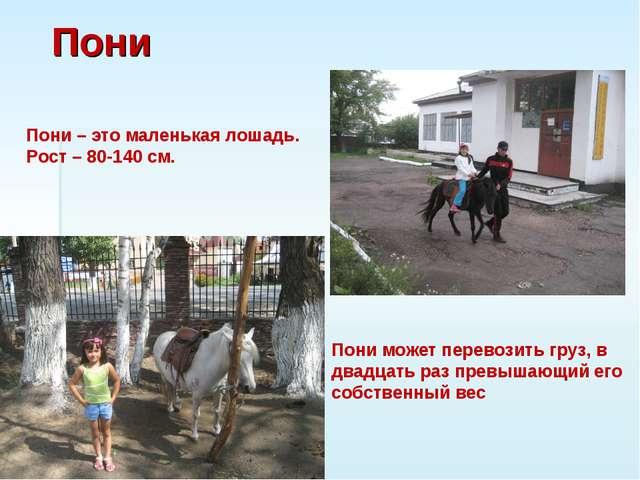 Пони Пони – это маленькая лошадь. Рост – 80-140 см. Пони может перевозить гру...