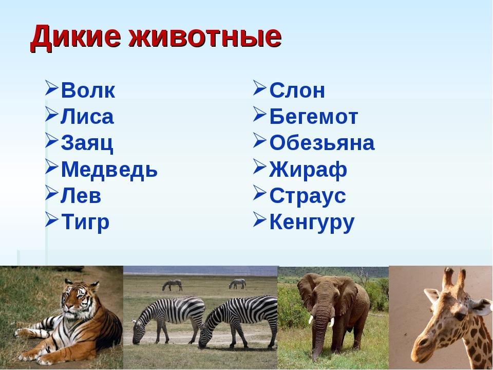 Дикие животные Волк Лиса Заяц Медведь Лев Тигр Слон Бегемот Обезьяна Жираф Ст...