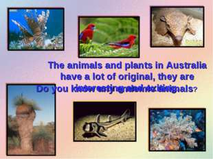 The animals and plants in Australia have a lot of original, they are interest