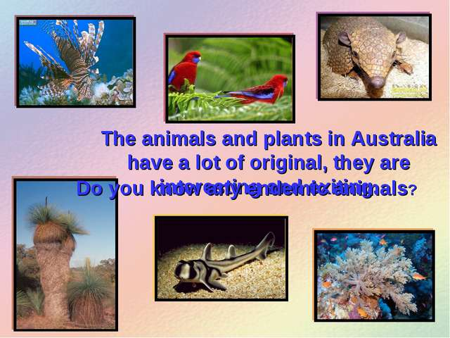 The animals and plants in Australia have a lot of original, they are interest...