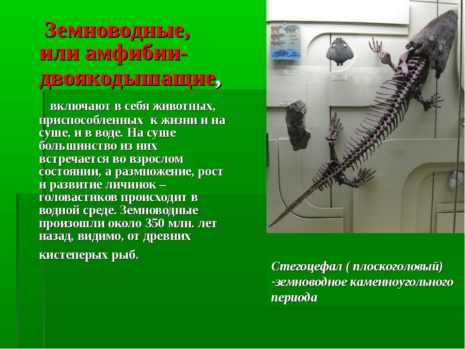 Земноводные, или амфибии-двоякодышащие, включают в себя животных, приспособл...
