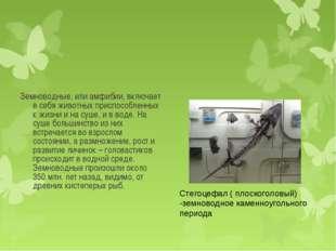Земноводные, или амфибии, включает в себя животных приспособленных к жизни и