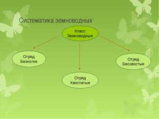 Систематика земноводных Класс Земноводные Отряд Безногие Отряд Хвостатые Отря