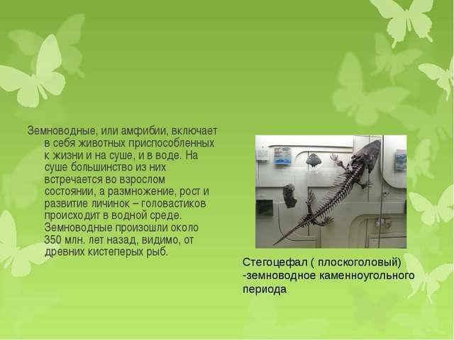 Земноводные, или амфибии, включает в себя животных приспособленных к жизни и...