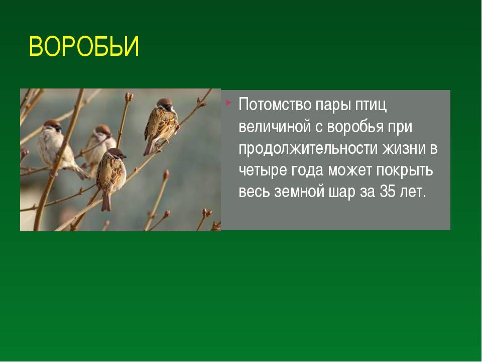 ВОРОБЬИ Потомство пары птиц величиной с воробья при продолжительности жизни в...