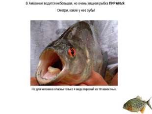 В Амазонке водится небольшая, но очень хищная рыбка ПИРАНЬЯ. Смотри, какие у