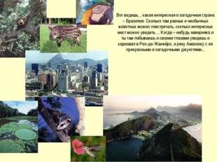 Вот видишь, , какая интересная и загадочная страна – Бразилия. Сколько там ра